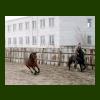 Левада. Март 2007