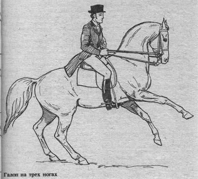 http://thehorses.ru/text/img_text/new/horse_22.jpg