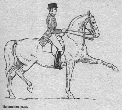 http://thehorses.ru/text/img_text/new/horse_33.jpg