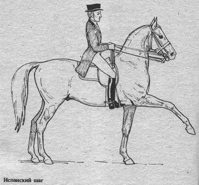 http://thehorses.ru/text/img_text/new/horse_34.jpg