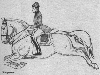 http://thehorses.ru/text/img_text/new/horse_35.jpg