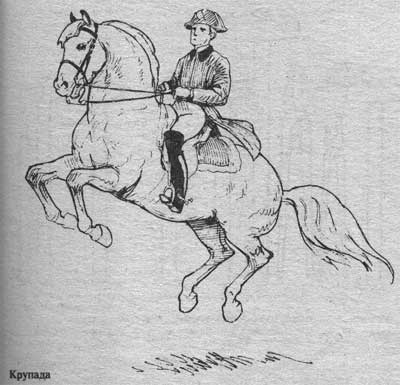 http://thehorses.ru/text/img_text/new/horse_43.jpg
