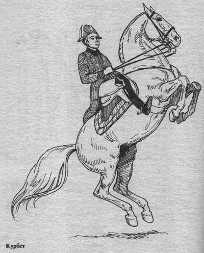 http://thehorses.ru/text/img_text/new/horse_45.jpg