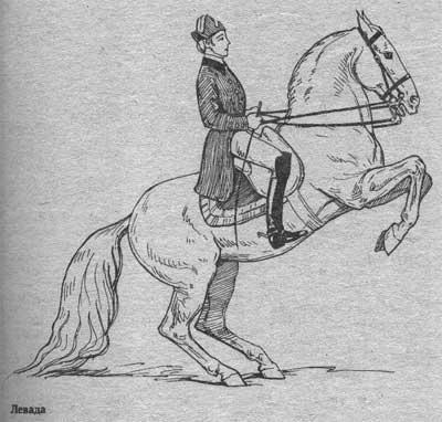 http://thehorses.ru/text/img_text/new/horse_46.jpg