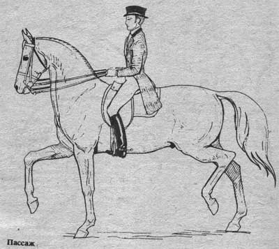 http://thehorses.ru/text/img_text/new/horse_55.jpg