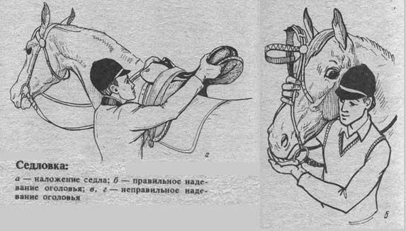 Как сделать плечо седло