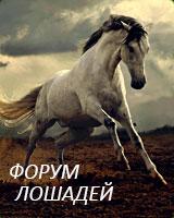 Форум лошадей, конный форум