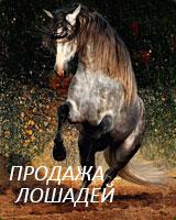 Покупка, продажа лошадей