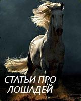 Статьи про лошадей