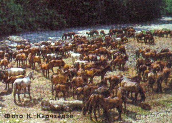 http://thehorses.ru/text_p/2009/tup.jpg