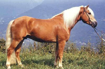 http://thehorses.ru/text_p/img_p2/142.jpg