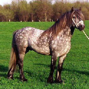 http://thehorses.ru/text_p/img_p2/157.jpg