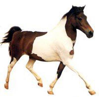 http://thehorses.ru/text_p/img_p2/202.jpg